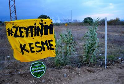 <p>Zeytin ağaçlarının termik  santral inşaatı için kesilmesine engel olmak isteyen Yırca köylülerinin  direnişinden. Arkada görülen ise halihazırdaki termik santral yapısı.<br />   Kaynak: Kuzey Ormanları  Savunması</p>