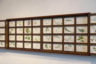 <p><strong>2a.</strong> Mark Dion, İstanbulun  İnatçı Otları ve İstanbulun Dirençli Deniz Yaşamı, 2017, Galata Rum Okulu. (Çizimler:  Burak Dak, Işık Güner, Reysi Kamhi, Dana Sherwood, Jana Weaver, Bryan M.  Wilson) Ahşap kabine, suluboya resimleri, Kabine 425,5 x 75,8 cm, 64 resim, her  biri 15,2 x 22,9 cm. Sanatçı ve Tanya Bonakdar Gallerynin (New York)  izinleriyle Tansa Mermerci Ekşioğlunun desteğiyle üretilmiş ve sergilenmiştir.<br />  Fotoğraf: Sahir Uğur Eren</p>