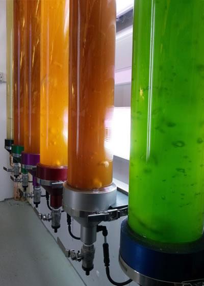 <p><strong>4.</strong> Yaygın olarak kullanılan FBR sistemleri - Kolon tipine  örnek<br />Kaynak: theaquaculturists.blogspot.com/2014/02/250214-marine-laboratory-introduces.html [Erişim 2.04.2019]