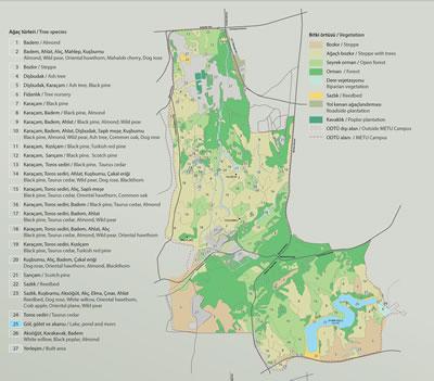 <p><strong>4.</strong> ODTÜ Kampüsü ağaç türleri ve bitki örtüsü haritası<br />   Kaynak: Doğa Koruma Merkezi</p>