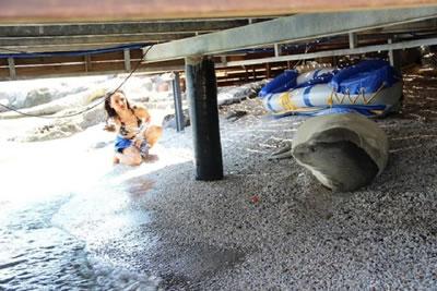 <p><strong>4. </strong>Şikayet edilen fok  balığı <br />   Kaynak: www.cumhuriyet.com.tr/Archive/2019/6/9/1430791_resource/AW724192_09.jpg</p>
