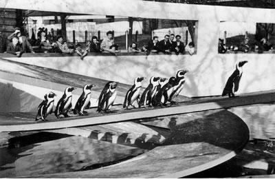 <p><strong>4.</strong> Lubetkin and Tecton tarafından 1934 yılında tasarlanan Londra Penguen  Havuzundaki penguenlere bakan insanlar<br /> Kaynak:  http://architecture-history.org/architects/architects/LUBETKIN/OBJ/1934,%20London%20Zoo,%20the%20gorilla%20house%20and%20a%20penguin%20pool,%20London,%20UK.html  [Erişim: 15.05.2020]</p>