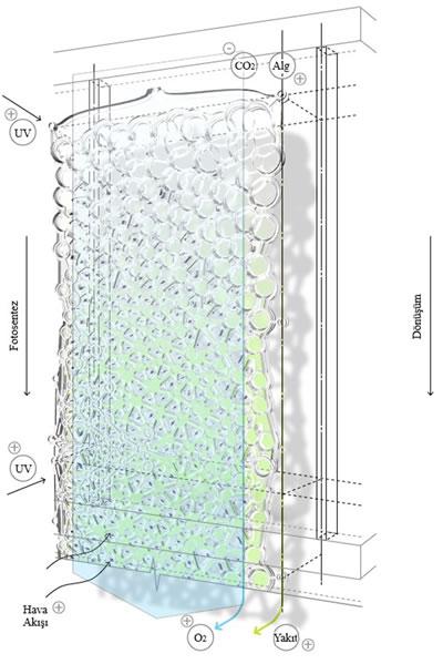 """<p><strong>5.</strong> Alg dokuması<br />   Kaynak: Petra, Bogias, 2014, """"Algae Textile: A  Lightweight Photobioreactor for Urban Buildings"""", yayımlanmamış yüksek lisans  tezi, Waterloo Üniversitesi.</p>"""