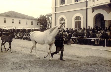 5. Cumhuriyetin ilk yıllarındaki at gösterileri
