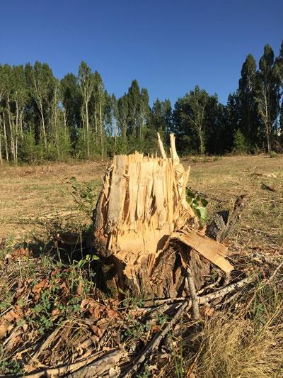 <p><strong>6.</strong> ODTÜ Kavaklık alanındaki ağaçların büyük bölümü, 8 Temmuz 2019 tarihindeki  müdahale ile kesildi.<br />   Kaynak: Kavaklık Direniyor İnisiyatifi</p>