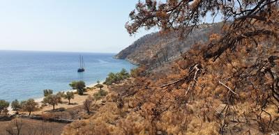 <p>Yangının ardından  Çökertme Koyu, Muğla-Milas<br /> Fotoğraf: Doğanay Tolunay</p>